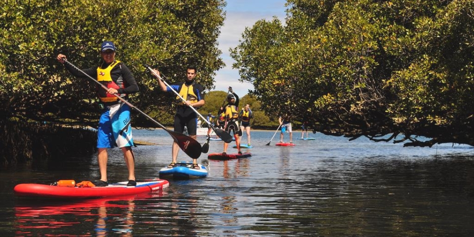 Adventure Kayaking - Dolphin SUP Tour - 1