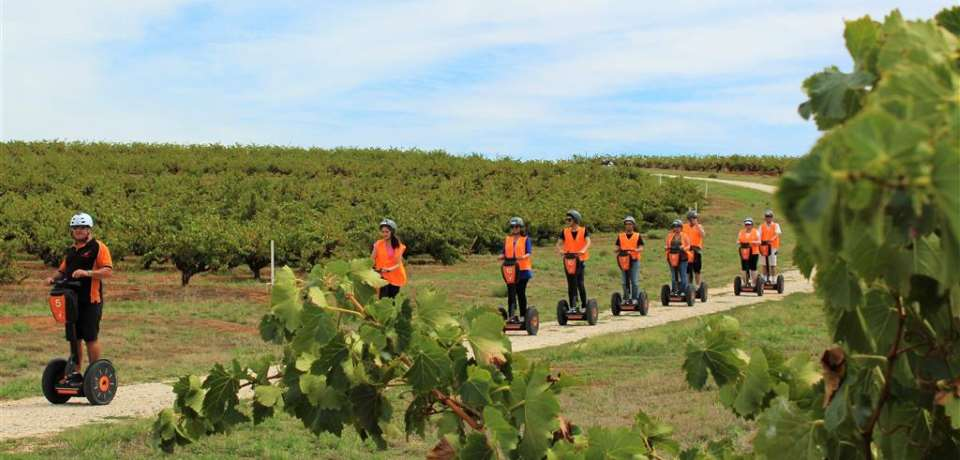 Segway Sensation SA - Seppeltsfield Segway Tour, Barossa Valley - N1